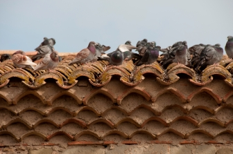 flock of birds sitting on top of a tiled roof