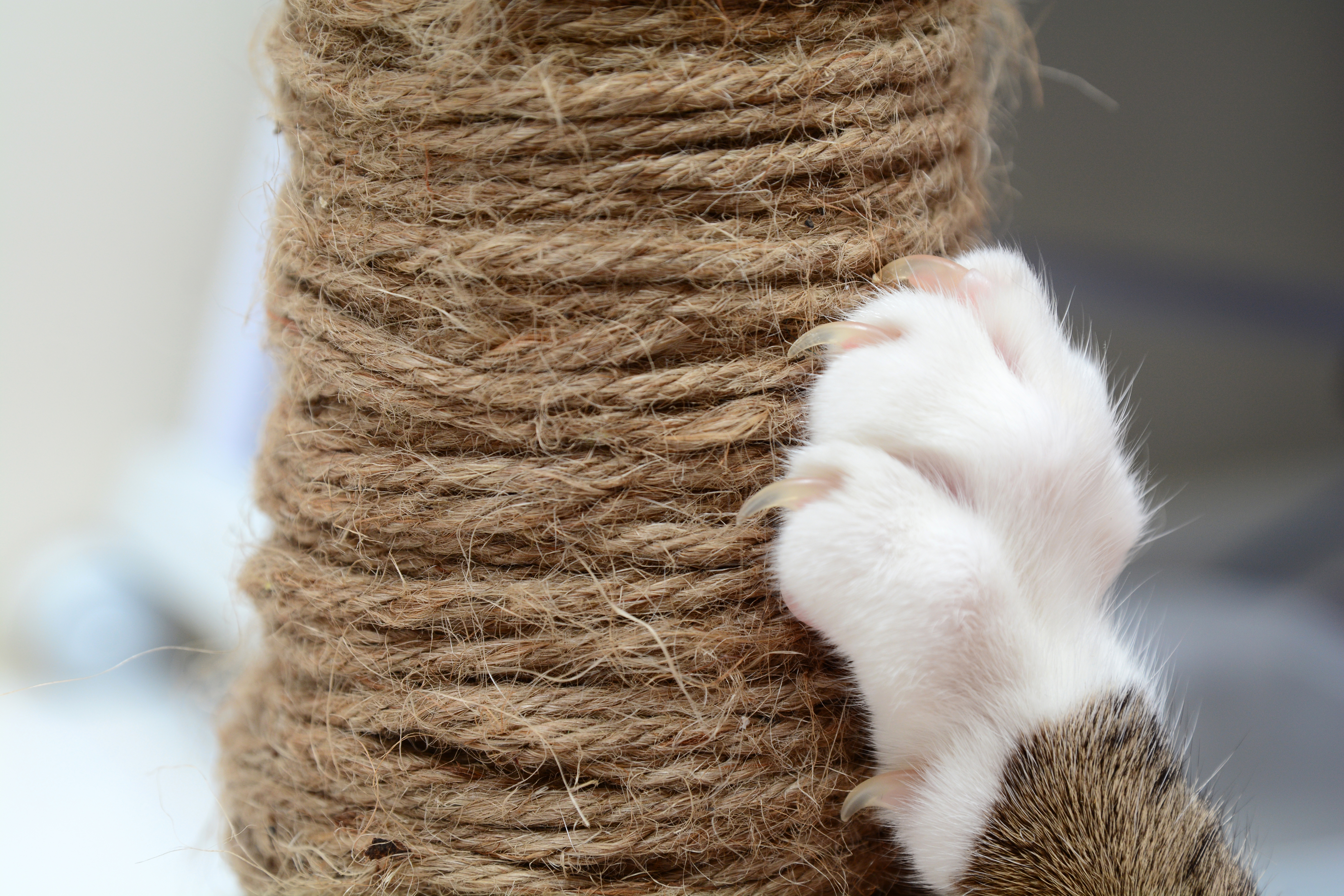 Cat scratching.claws on the scratching post